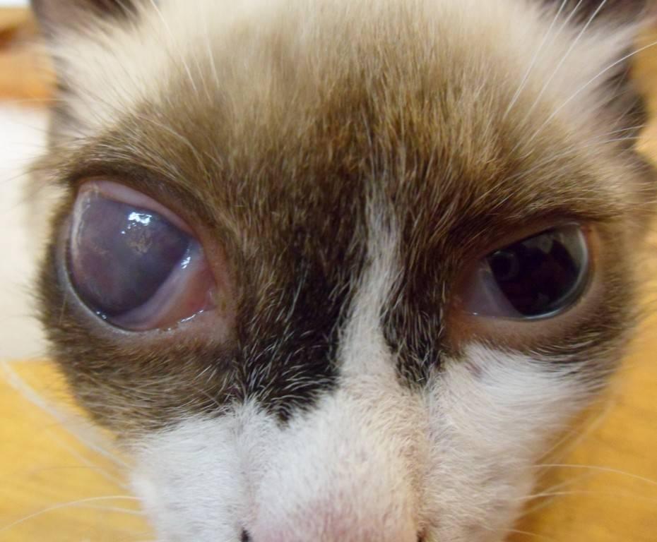 У кота глаза наполовину закрыты пленкой. 6 причин