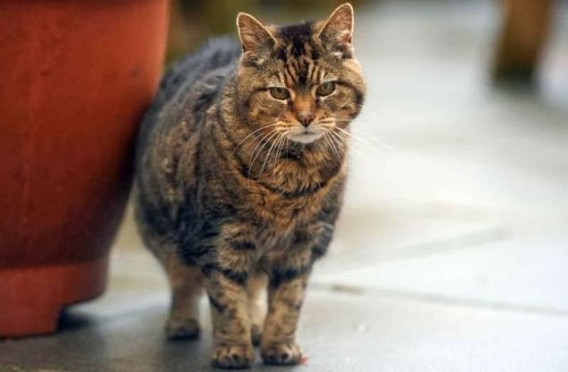 Коты и кошки-долгожители