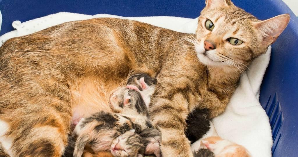 Как вызвать роды у кошки: стимуляция и ускорение
