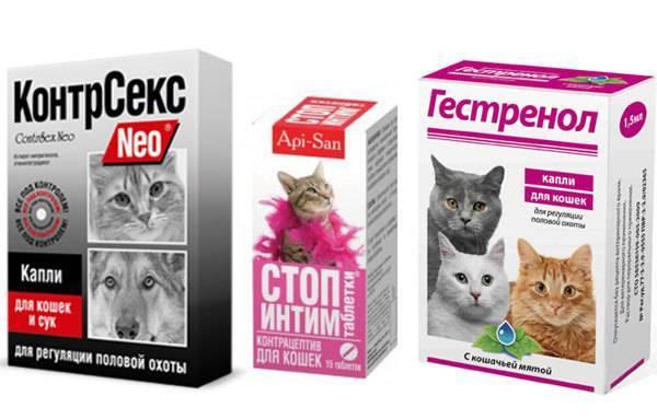 ᐉ 4 вида уколов для кошек вместо стерилизации: гормональные, противозачаточные, чтобы не гуляла - kcc-zoo.ru