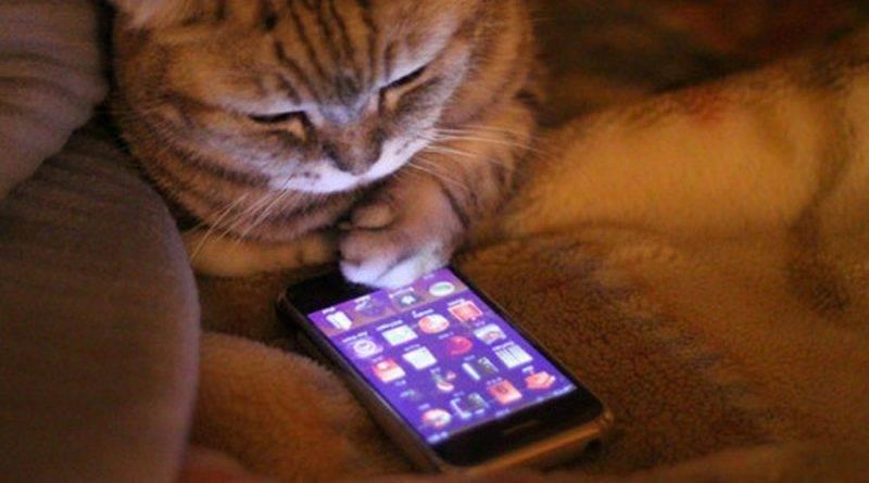 Большой обзор: приложения для котиков