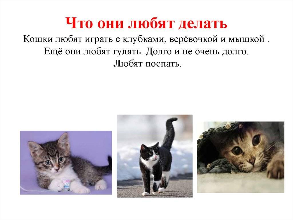 Кот, который не умеет играть в игрушки: как научить? – интересное о поведении кошек