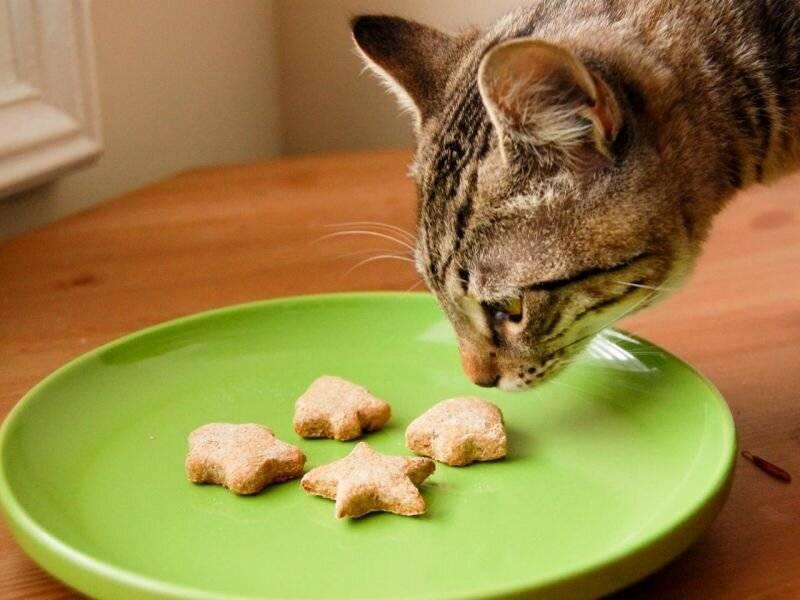Можно ли кошке давать кефир: о продукте, полезен ли для кошек и котят, как включать в меню