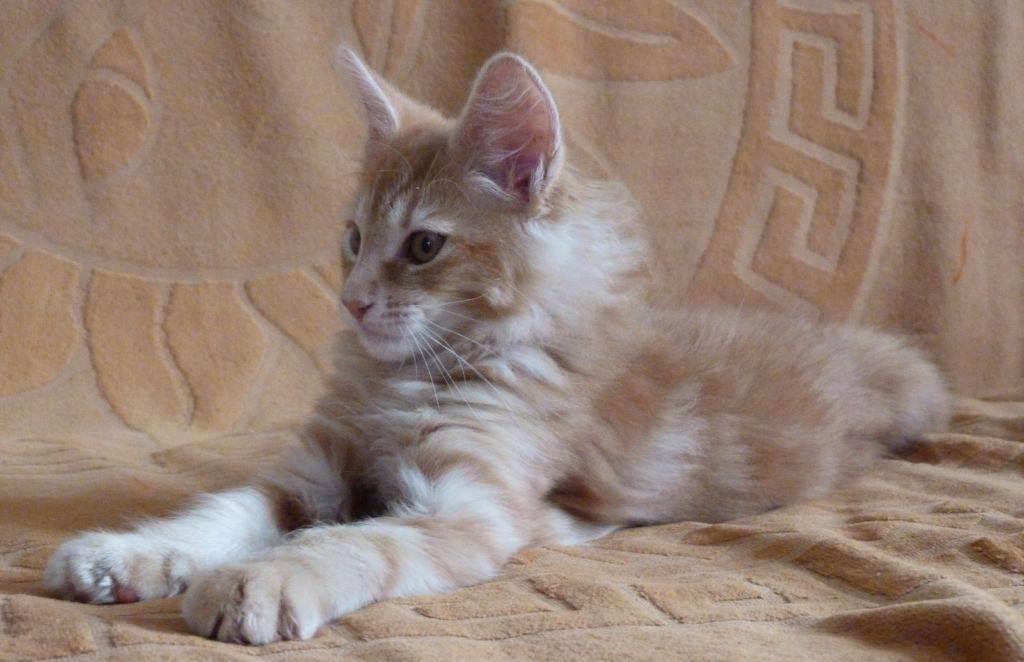Как избавиться от запаха кошачьей мочи в квартире? десять 100% способов