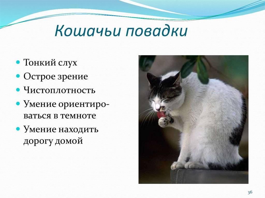 Психология кошек: особенности поведения и язык взглядов / статьи / котус