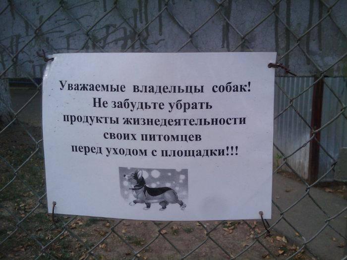 5 способов отвадить соседских котов от своего участка
