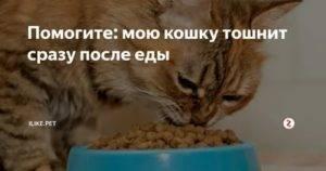 Кошку рвет после еды непереваренной пищей - oozoo.ru