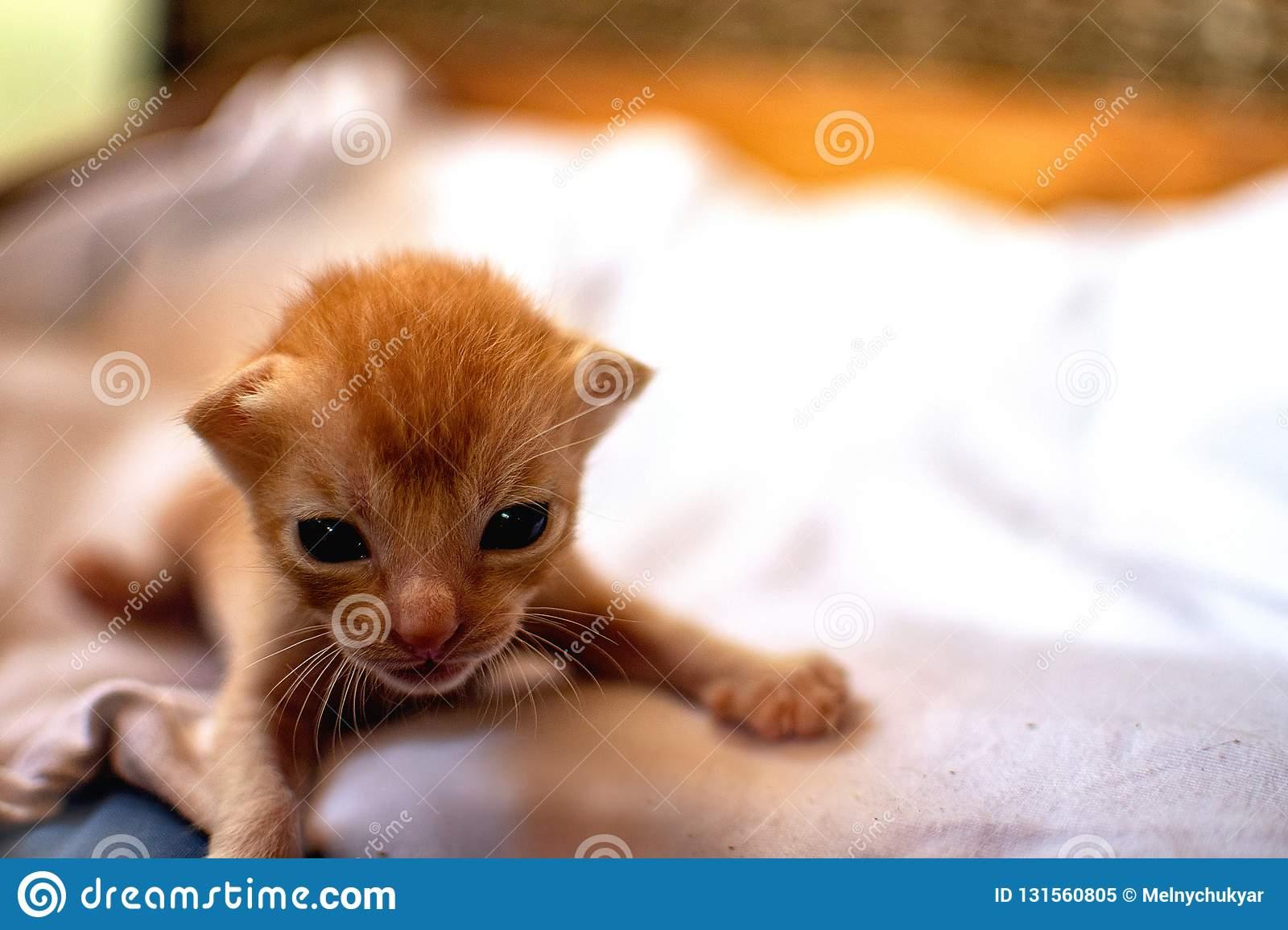 Малыш и кошка. первое знакомство кошки с новорожденным