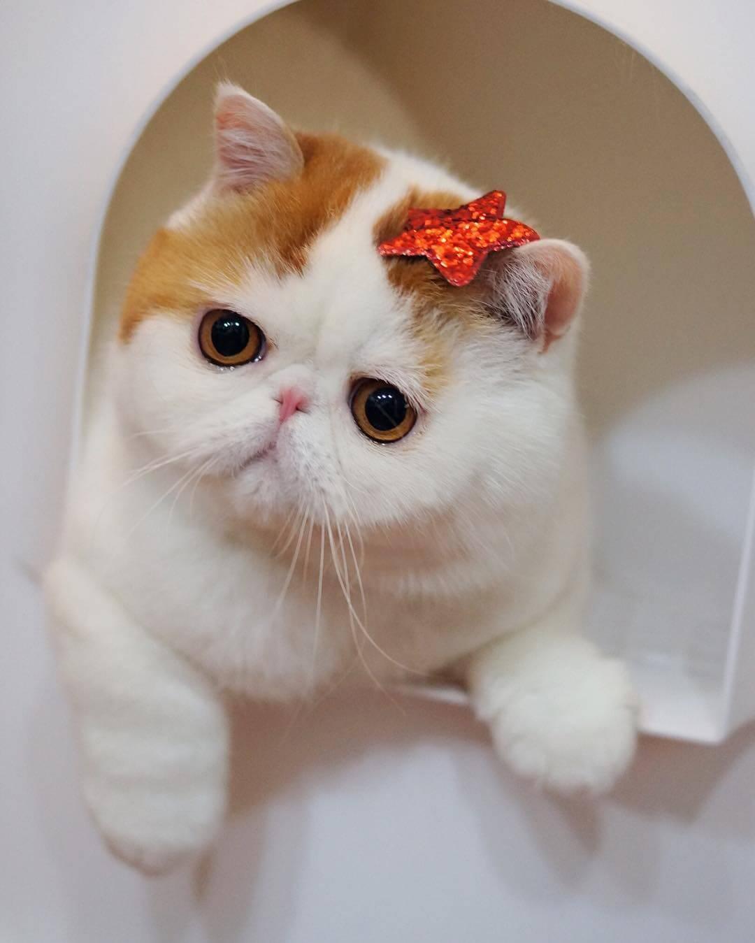 Размер имеет значение: породы кошек с большими глазами