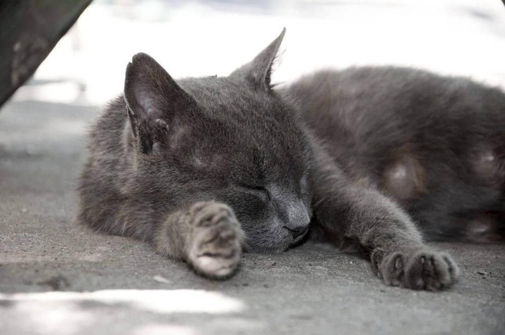 У кошки урчит в животе: причины вызывающие «ураган» у питомца