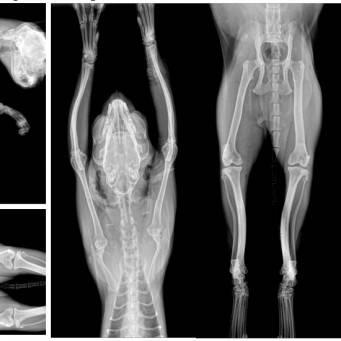 Гиперпаратиреоз у кошек почему бывает и последствияветлечебница рос-вет