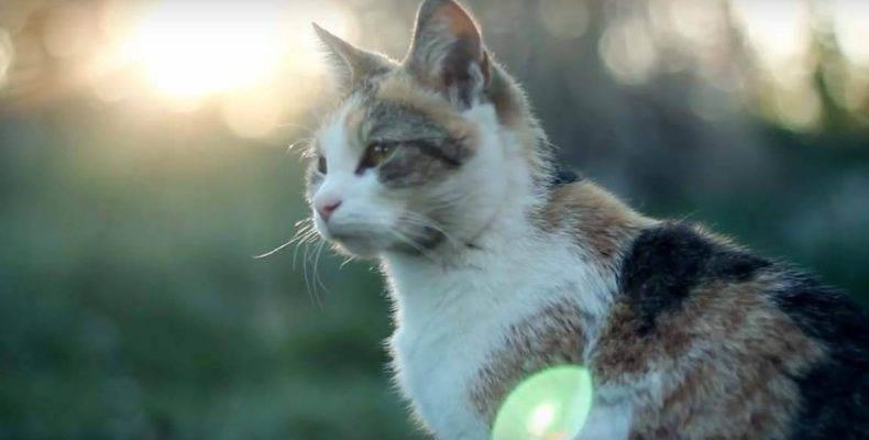 Таблетки для котов