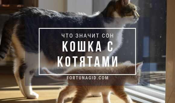 Сонник человек в облике кота. к чему снится человек в облике кота видеть во сне - сонник дома солнца