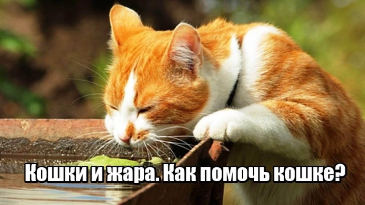 Как помочь кошке в жару ️