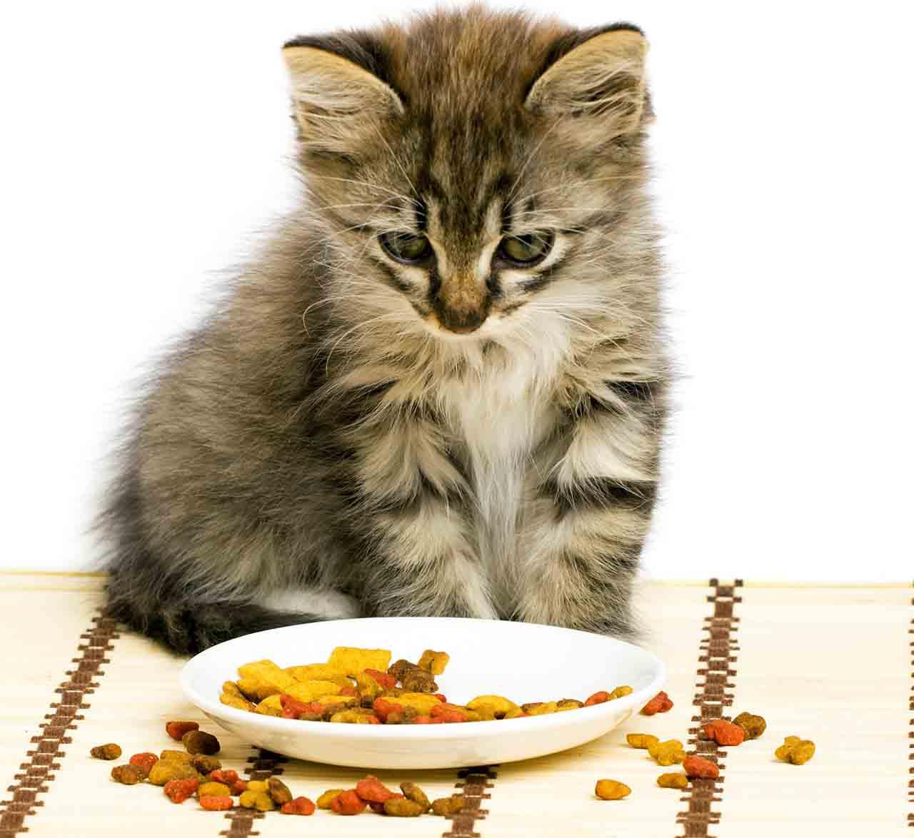 Чем кормить стерилизованную кошку: полный список разрешенных и запретных продуктов
