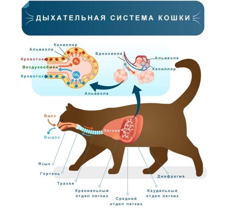 По каким причинам у кошки может быть высунут язык?   мир кошек почему у кошки постоянно высунут язык?   мир кошек