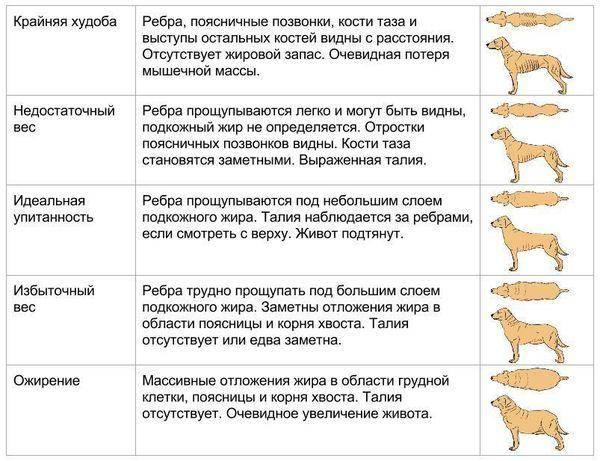 Нормальный вес кошки.