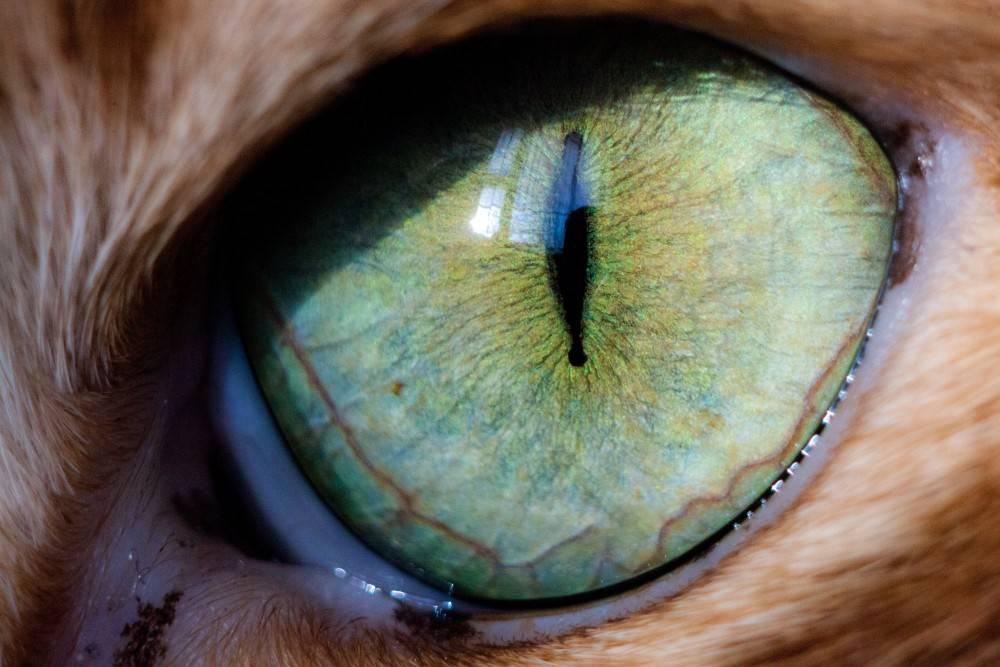 Что делать, если кошка щурит один глаз, на сколько это может быть опасно?