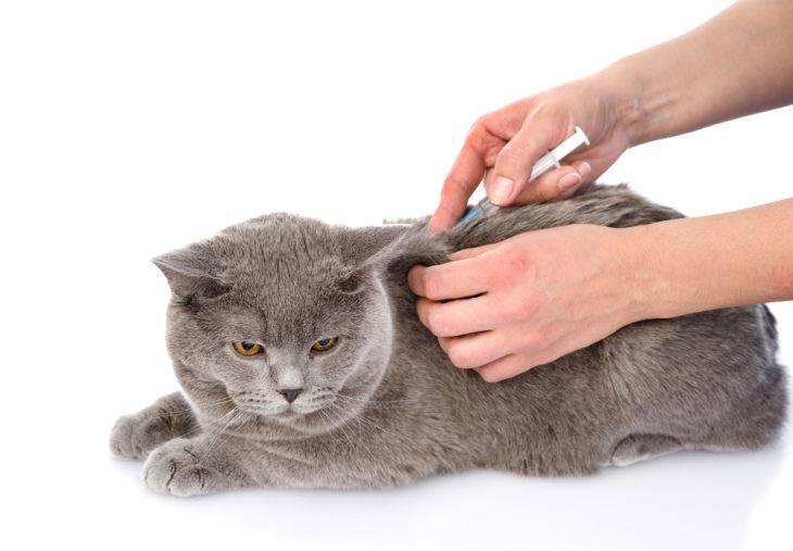 Химическая кастрация котов: суть метода, препараты, способ ввода