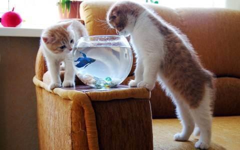 Почему кот ест оливки зеленые. кошка ест оливки (маслины) — почему и полезно ли это? польза плодов для кошек
