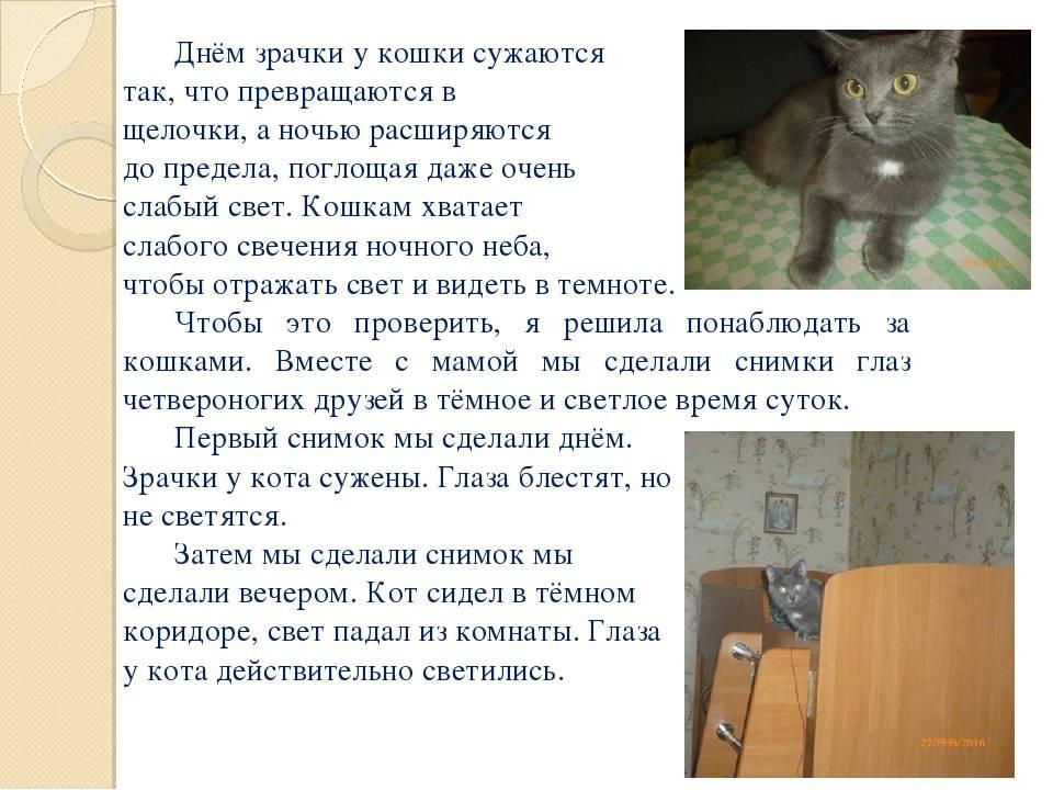 Расширенные зрачки у кота