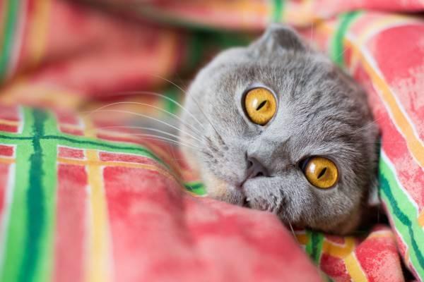 Есть ли у кошек память