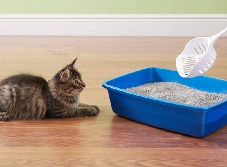 Кошка не ходит в лоток: возможные причины и способы устранения