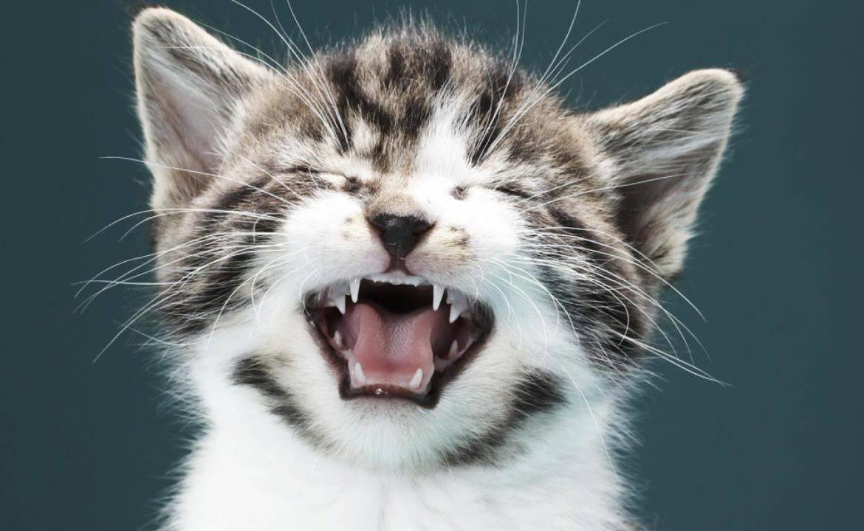 Почему кошка чихает? что делать, если это происходит постоянно?