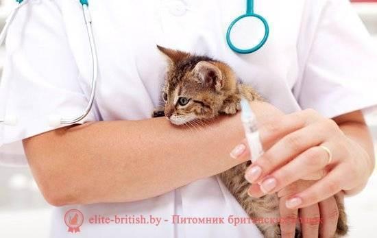 Нужны ли прививки кошкам