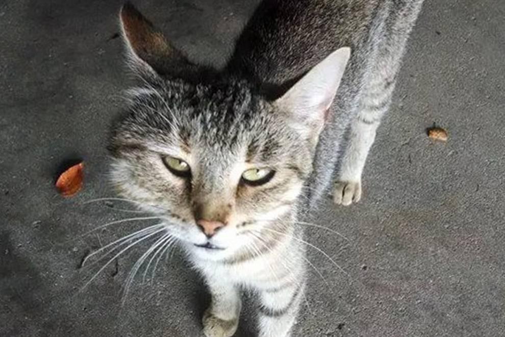 Кошку укусила оса - что делать в такой ситуации