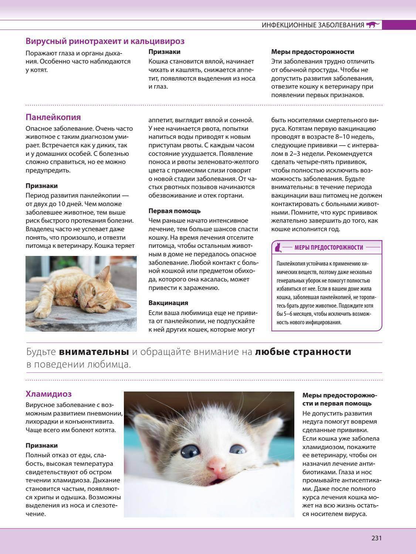 Лечение ринотрахеита у кошек в домашних условиях   портал о народной медицине