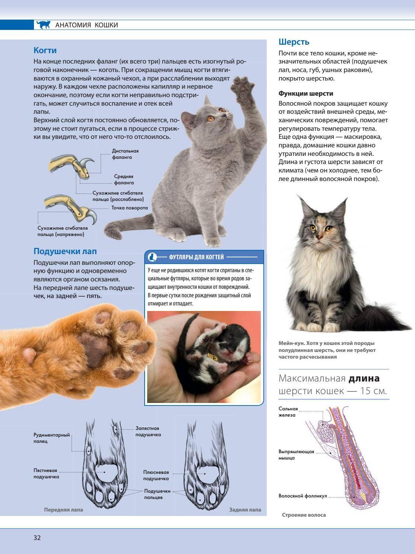 Болезнь лап у котов