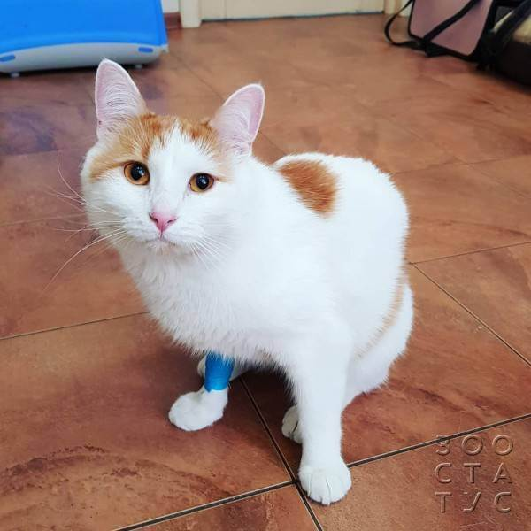 Признаки авитаминоза у кошек и методы избавления от него