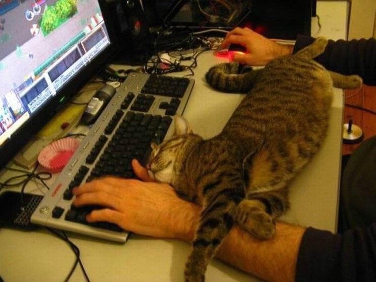 Лайфхаки для котов и кошек, которые упростят жизнь