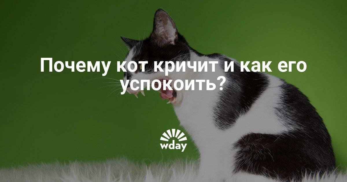 Почему кот или кошка постоянно мяукает или орет по ночам без причины, что делать, как отучить питомца кричать?