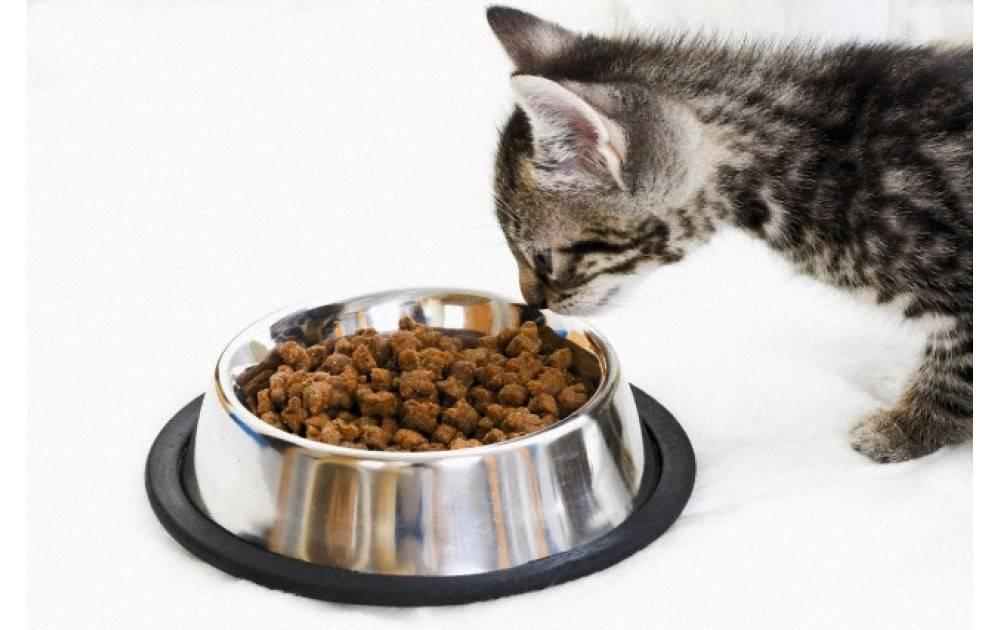 Можно ли кормить кошку сухим и влажным кормом одновременно?