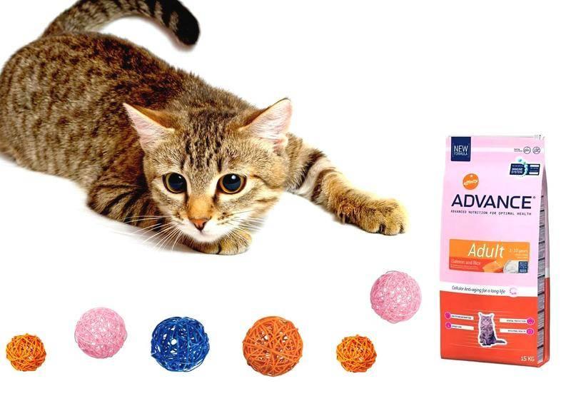 Качественный рацион для домашней кошки: корм «гоу» холистик класса