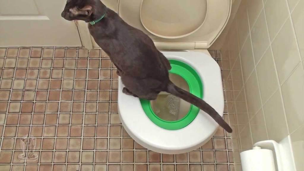 Кот орет когда ходит в туалет по большому — о животных на чистоту