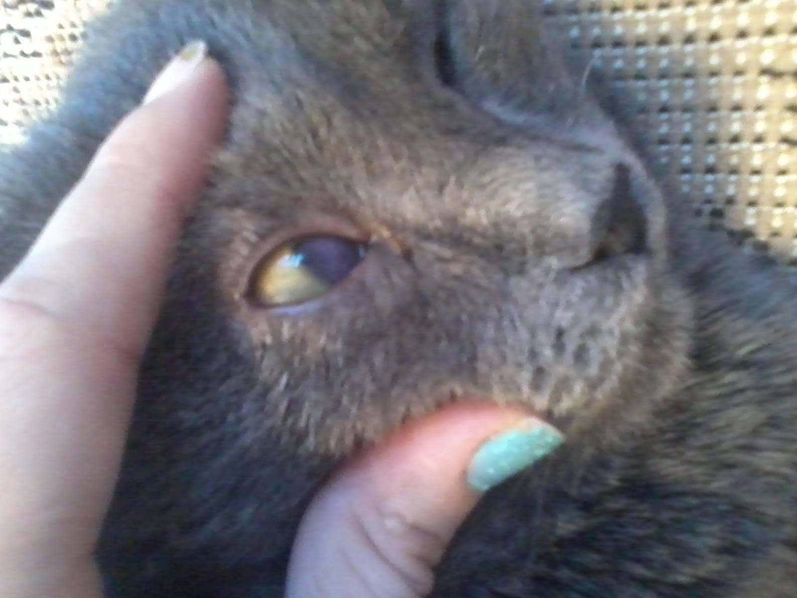 Кот болеет глаза затянуты пленкой