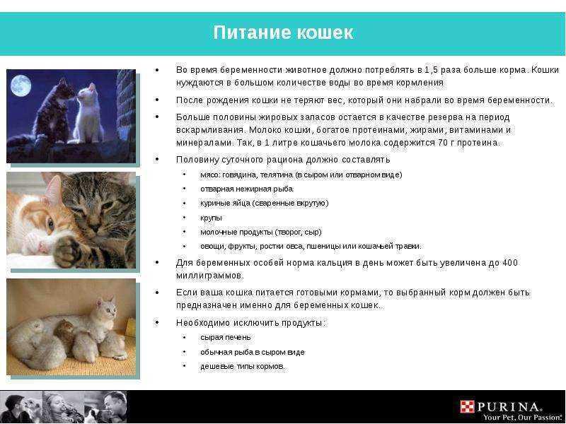 Как кормить кошку принудительно: правила, рекомендации
