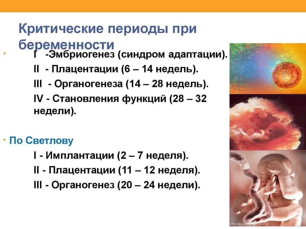 Сколько длится беременность у кошек в первый и следующие разы: примерная продолжительность гестации