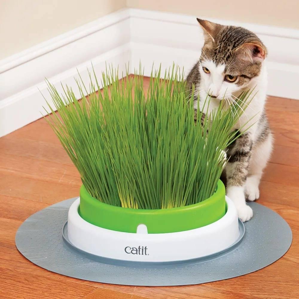 Трава для кошек (23 фото): какую травку любят есть коты? как сажать ее в горшок? как вырастить?