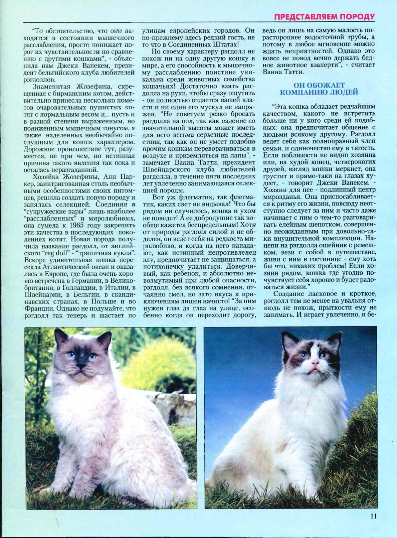 Кошка рэгдолл – описание, история и стандарты породы, основные рекомендации по уходу и содержанию