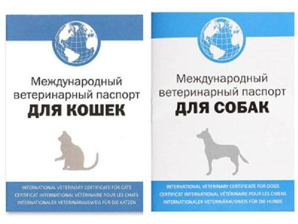 Как заполнять паспорт кошки?