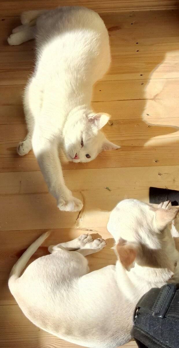 Дегтярное мыло от блох у кошек