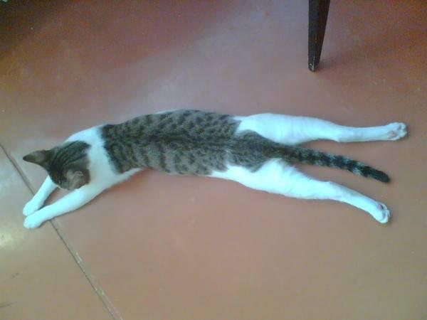 Почему кота трясет и он дрожит всем телом, будто ему холодно, что делать: причины тремора у котят и взрослых кошек