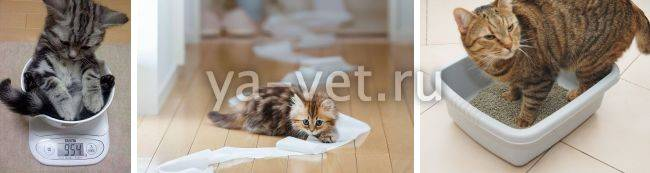 Диарея с кровью у котов и кошек