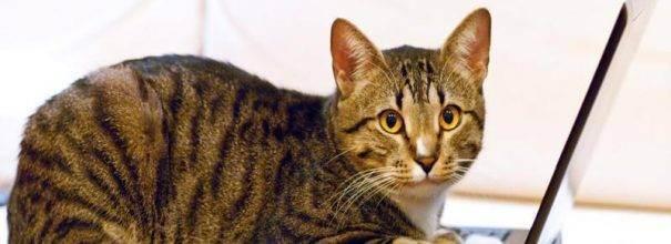 Можно ли мыть кошку хозяйственным мылом, дегтярным, детским, обычным?