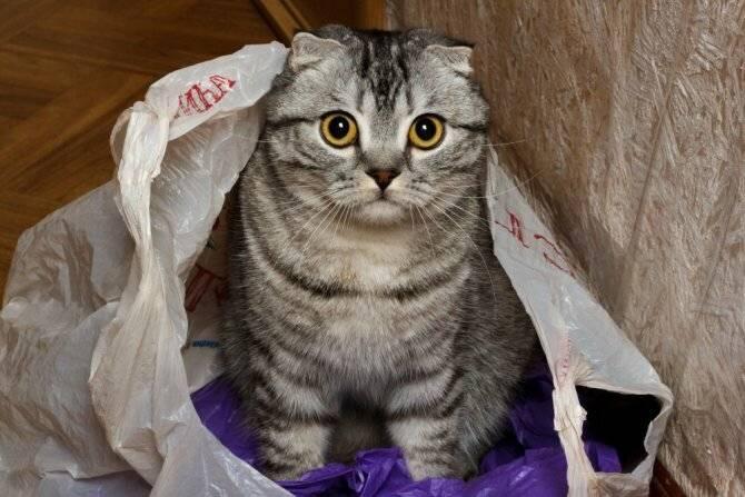 Что делать, если кошка стала много есть