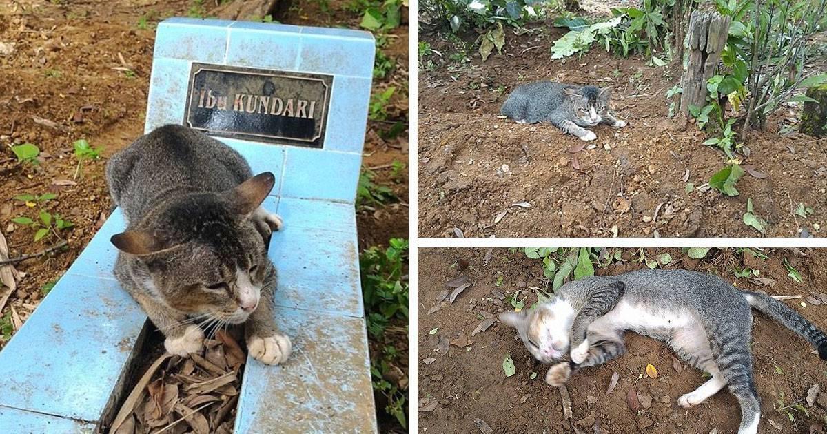 Что сулят приметы, если дома умер кот?